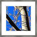 Silk Tree Framed Print