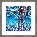 Silver Barb Reflections Framed Print