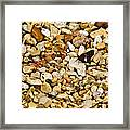 Silver Spotted Skipper 1 Framed Print