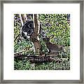 Silver Tabby And Wild Rabbit Framed Print