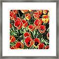 Skagit Valley Tulips 10 Framed Print
