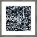 Skeleton Tree Framed Print