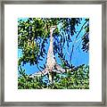 Puget Sound Great Blue Heron Skirt Wings Framed Print