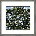 Slanted Branches Framed Print