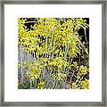Small Yellow Onion (allium Flavum) Framed Print
