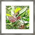 Snail On Leaf Framed Print