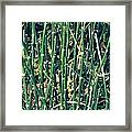 Snake Grass On The Beach Framed Print