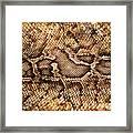 Snake Skin Framed Print