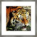 Snarling Tiger Framed Print