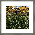 Sneezeweed And Lupine Wildflowers At Lake Irwin Framed Print