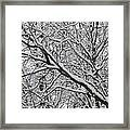 Snow Covered Branches Framed Print