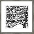 Snow Covered Tree Branches Framed Print