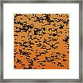 Snow Goose Migration Framed Print by Mircea Costina Photography