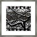 Snow On Branches Framed Print