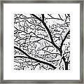 Snowy Branch Framed Print