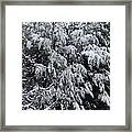 Snowy Branches Winter Framed Print