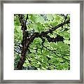 Soft Green Leaves Framed Print