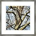 Soft Winter Light Framed Print