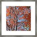 Southern Illinois Maple Framed Print