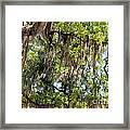 Spanish Moss Framed Print