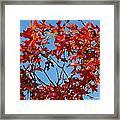 Spanish Oak Tree In Texas Framed Print by Rebecca Cearley
