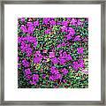 Spanish Shawl Flowers Framed Print