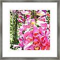 Spikes Of Pink Foxgloves Framed Print