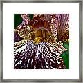 Splashed Iris Framed Print