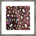 Spotted Flatworm Framed Print