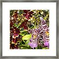 Spotted Flowers Framed Print by Silvie Kendall