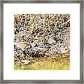 Spotted Sandpiper At The Canal Framed Print