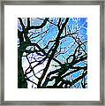 Spring Approaches Framed Print