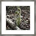 Spring Forest Fern Framed Print