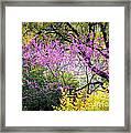 Spring Trees In San Antonio Framed Print