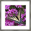 Spring's Beauty Framed Print by Crystal Joy Photography
