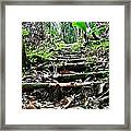 Stairs In The Forest Framed Print by Jenny Senra Pampin
