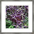 Star Flowers Framed Print