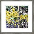 Stella Magnolia And Forthysia Framed Print by Peter Sit