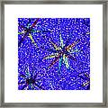 Stellate Leaf Hairs, Light Micrograph Framed Print by Dr Keith Wheeler