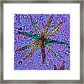 Stellate Plant Hair, Light Micrograph Framed Print