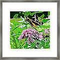 Stencilled Butterfly Framed Print