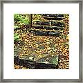 Stone Stairway In Forest, Cape Breton Framed Print