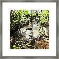 Stream At Devonian Park Framed Print