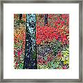 Sumac Slope And Lichen Covered Tree Framed Print