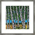 Summer Birches Framed Print