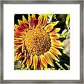Sunflower And Bud Framed Print