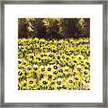 Sunflower Field Series W Silver Leaf By Vic Mastis Framed Print