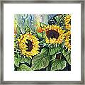 Sunflower Serenade Framed Print