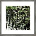 Sunlit Bamboo Framed Print