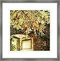 Sunlit Stone Building With Grapevines Framed Print by HD Connelly